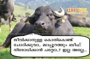 Beef banned in Maharashtra