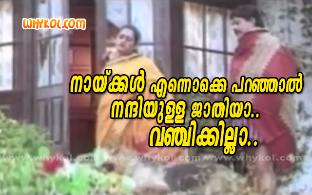 Dogs malayalam funny film comment