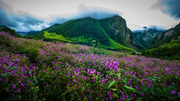 Valley-of-Flowers-in-Uttarakhand-by-Sandeep-Shande-Flickr-pwww.flickr.comphotosshande