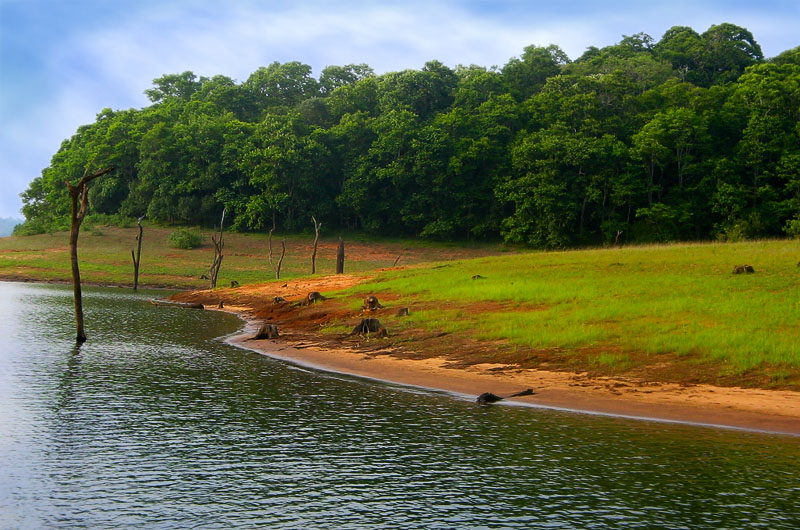 Honeymoon Thekkady