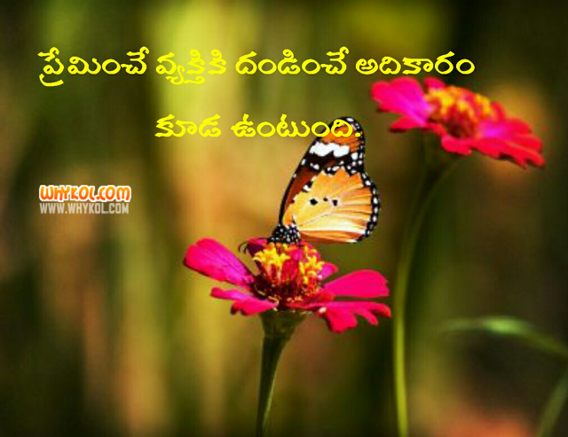 Telugu Status on Value of a person who loves you very much